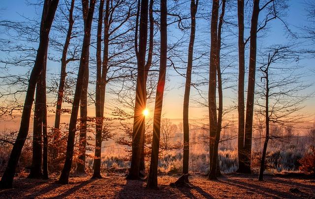 foresta luce